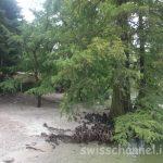 ブリッサーゴ島の植物園 ( TI )!スイスで南国気分を味わおう♬