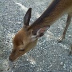 スイスの動物園!森の動物がいっぱいの Tierpark Goldau ( SZ ) の魅力を紹介!