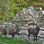 365日営業!Wildnispark Zürich Langenberg へ野生動物を見に行こう!