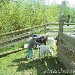 Zug (ツーク) の公園!Abenteuerspielplatz Fröschenmatt は遊具が使い放題で動物とも触れ合える!